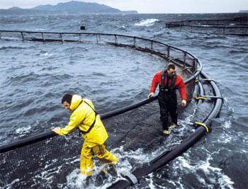 Somon Balığı Üretim Çiftliklerinde Hijyen Oldukça Önemli