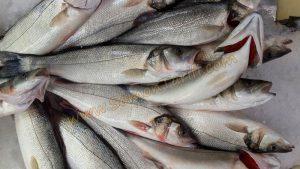 Taze Balık ile Bayat Balık Nasıl Anlaşılır?