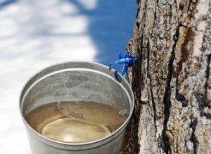 Ağacın gövdesine takılan bir muslukla özsuyu temin edilir
